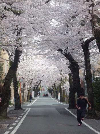 ☆桜トンネルを走るP1050223.JPG