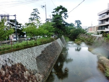 夙川松並木CIMG1889.JPG