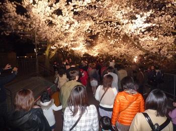 夜桜P1120689.JPG
