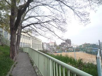 学校横P1120902.JPG