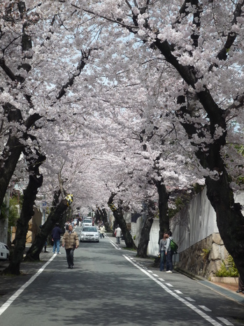 桜トンネルをのぞむP1090996.JPG