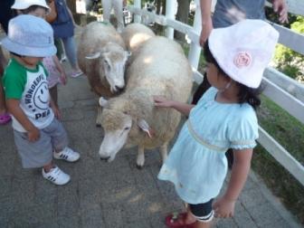 羊P1060391.JPG