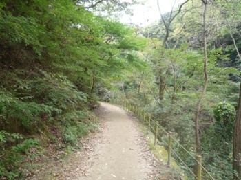 1青谷道P1020265.JPG