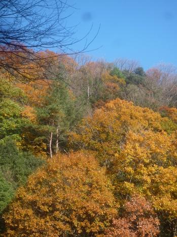 秋の山P1110976.JPGのサムネール画像