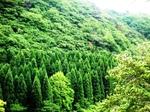 山の緑P1050503.JPG